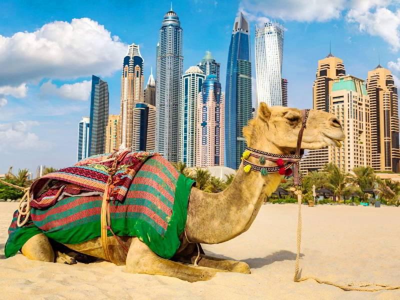 Emirati Classici 2021/2022.